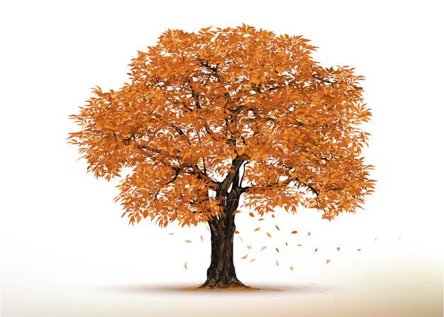 autumn-tree-realistic-trees-isolated-white_38668-189